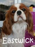 Bandeau Eastwick